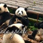 検索が下がった?検索エンジンGoogleのパンダ・アップデートの更新-Panda4.0での変更点と対策
